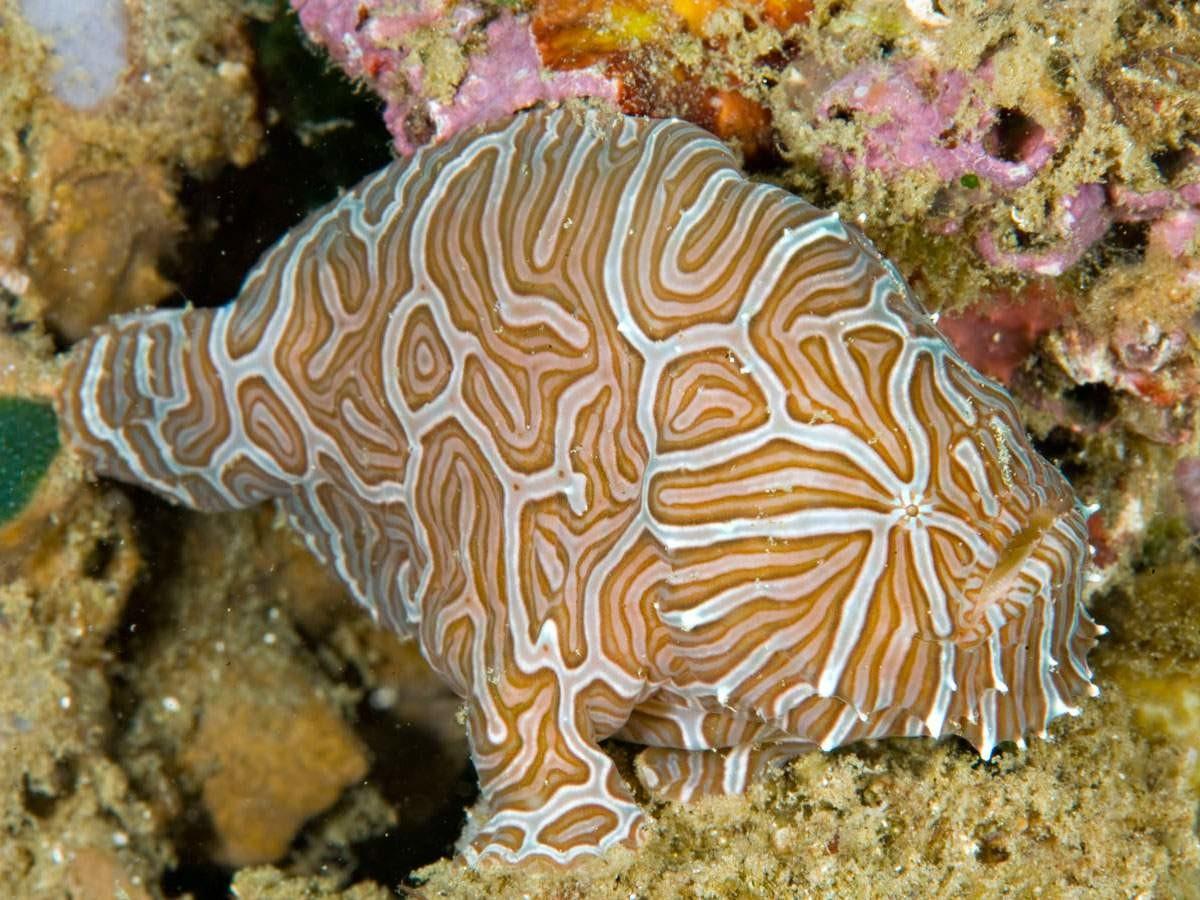 Подводные монстры, название которых четко отображает их суть красиво, монстры, океан, опасные, рыбы, фото
