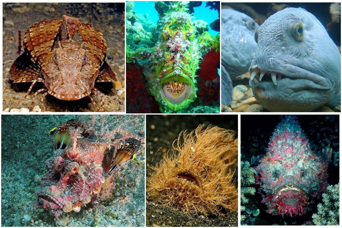 Присмотритесь - те, кто их называли, уловили самую суть. Конечно, всем знакомы рыба-пила, рыба-молот и т.д., но эти рыбешки будут помельче и не такие известные красиво, монстры, океан, опасные, рыбы, фото