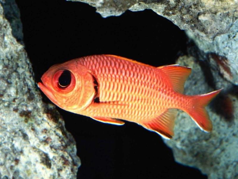 Рыба-белка красиво, монстры, океан, опасные, рыбы, фото