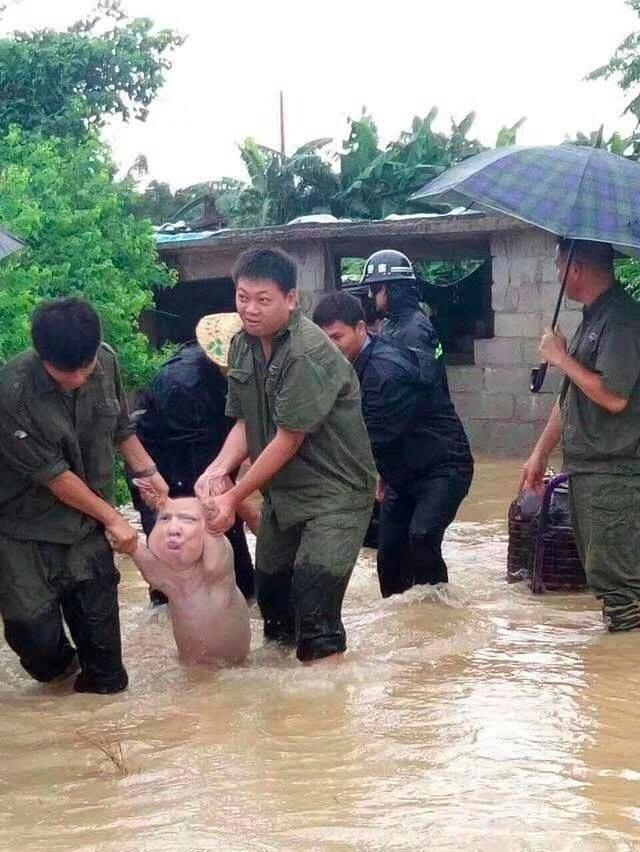 И даже в двух вариантах забавно, наводнение, прикол, свинья, улыбка, фотожаба, фотошоп, юмор