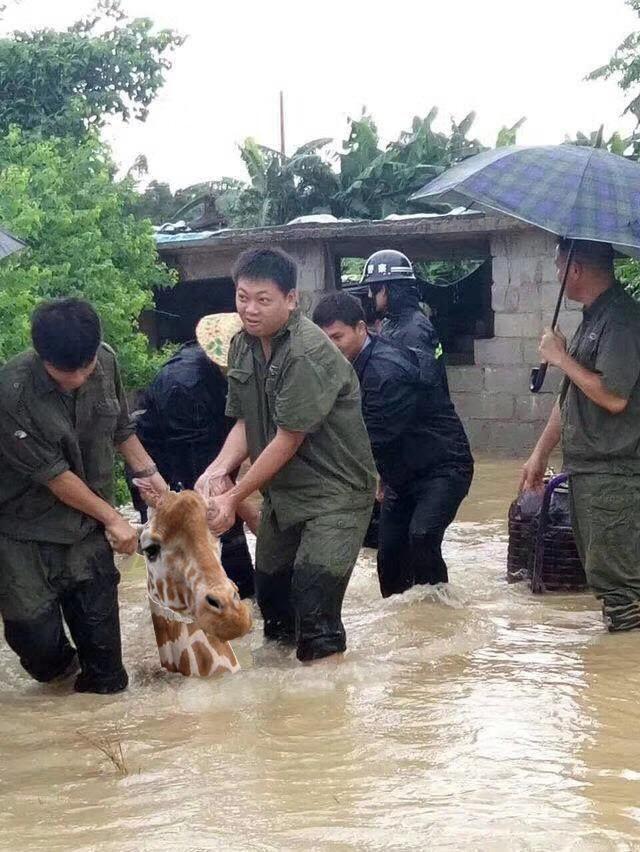 Интересно, как бы это могло произойти забавно, наводнение, прикол, свинья, улыбка, фотожаба, фотошоп, юмор