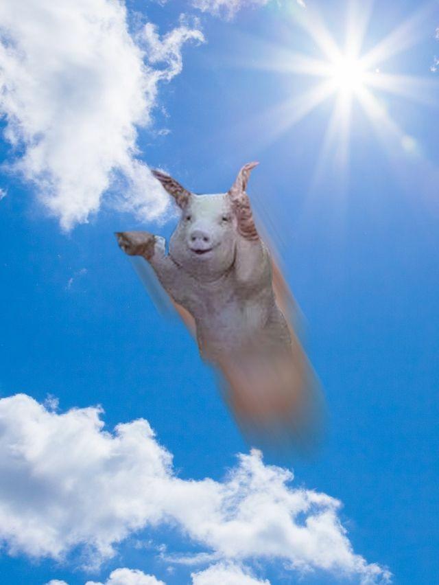 Лети свинка, ты свободна! забавно, наводнение, прикол, свинья, улыбка, фотожаба, фотошоп, юмор