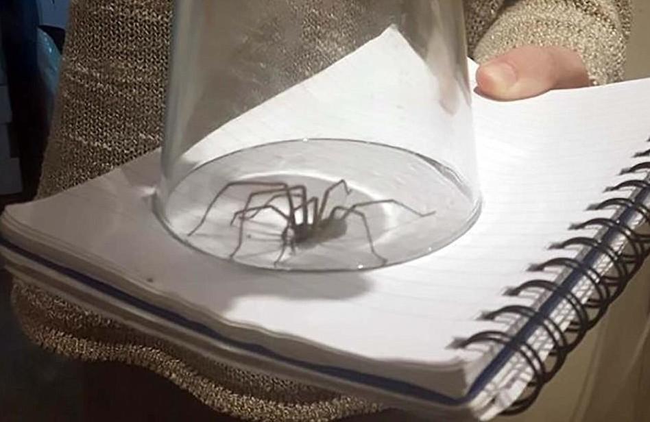Плохая погода спровоцировала нашествие больших пауков в домохозяйства Великобритании в мире, люди, мерзость, нашествие, пауки, погода