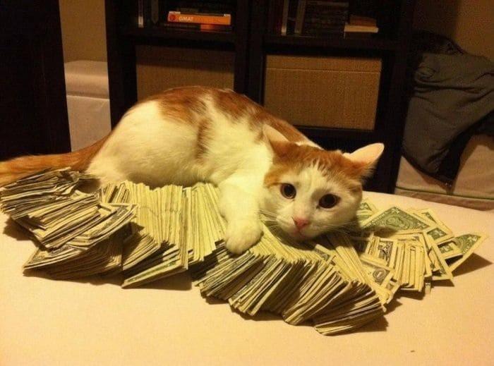 А сдача - котику на рыбку! деньги на ветер, лишние деньги, нувориши, понты, сладкая жизнь, смешно, странные люди, фото