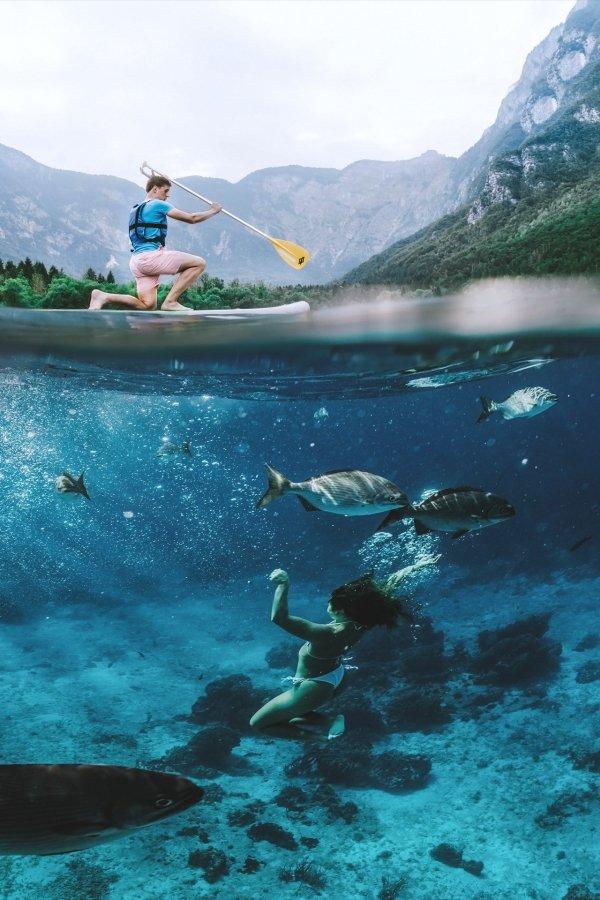 Под водой день, животные, кадр, люди, мир, снимок, фото, фотоподборка