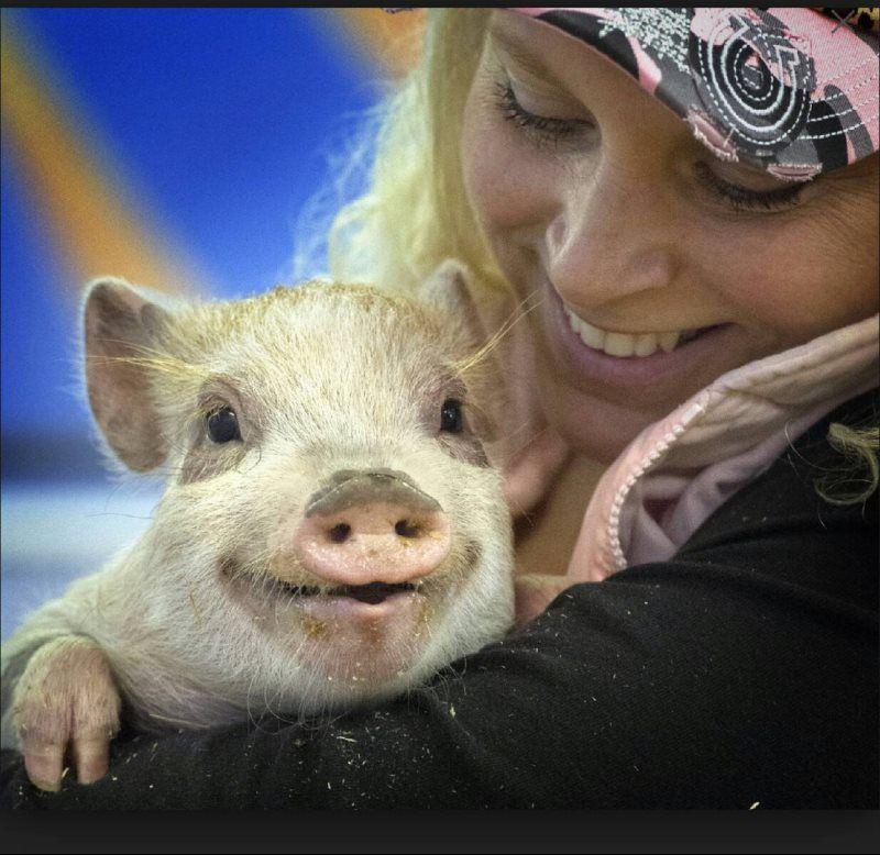 Очаровательная улыбка день, животные, кадр, люди, мир, снимок, фото, фотоподборка