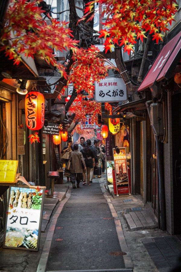 Япония день, животные, кадр, люди, мир, снимок, фото, фотоподборка