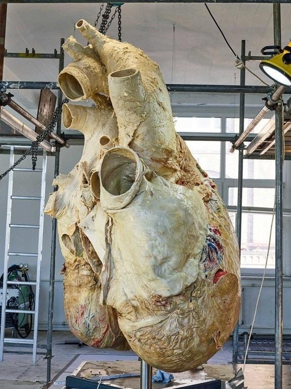15. Сердце синего кита интересное, интернет, люди, мир, снимок, фото, явление