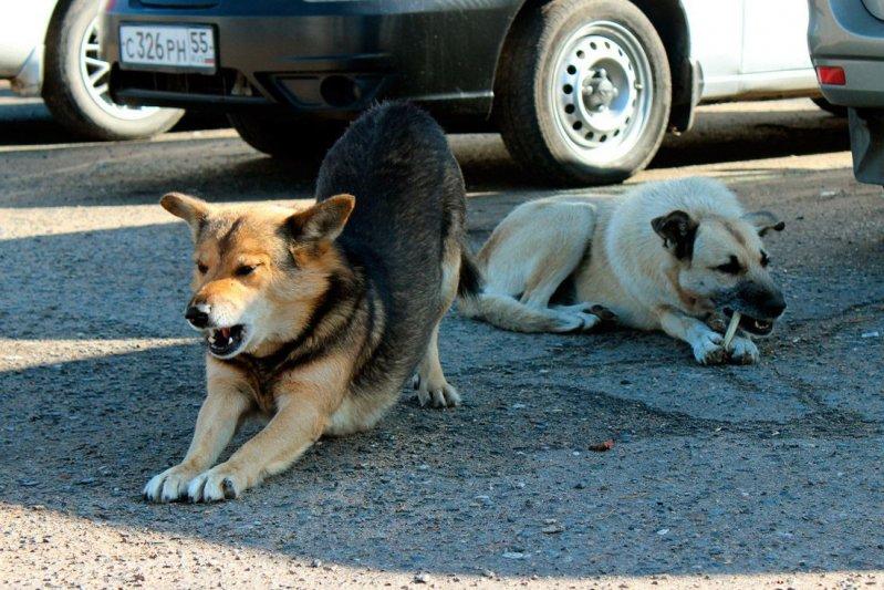 ДТП с собакой: кто виноват, что делать?