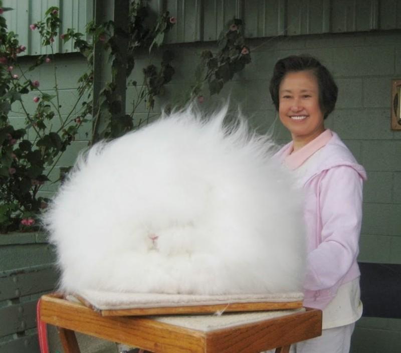 6. Этот огромный пушистый комок на самом деле... кролик без фотошопа, вот это да!, интересные фотографии, необычные, реальность, фотошоп