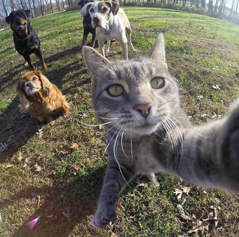 Животные делают селфи фото