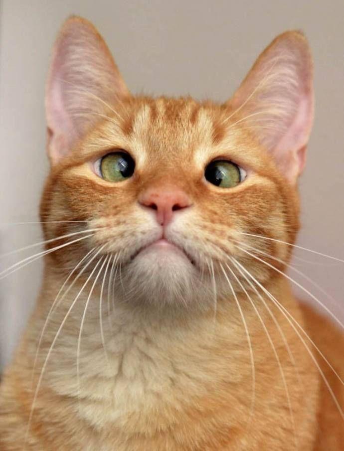 огромному коты с косыми глазами фото же, только