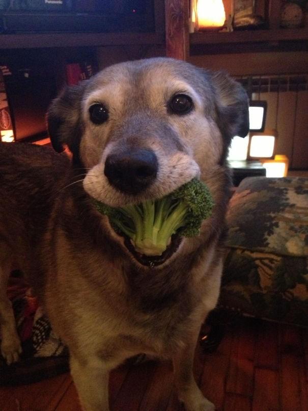 """""""Мой пёс принёс мне маленькое зелёное дерево вместо палки"""" вещи. милота, домашний питомец, животные, кошка, подарки, собака"""