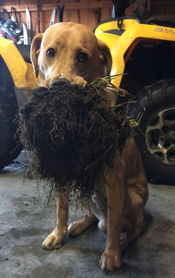 """""""Моя собака принесла мне кусок земли сегодня"""" вещи. милота, домашний питомец, животные, кошка, подарки, собака"""
