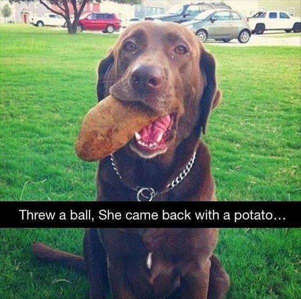 """""""Я бросил своей собаке мяч, а она принесла мне картошку"""" вещи. милота, домашний питомец, животные, кошка, подарки, собака"""