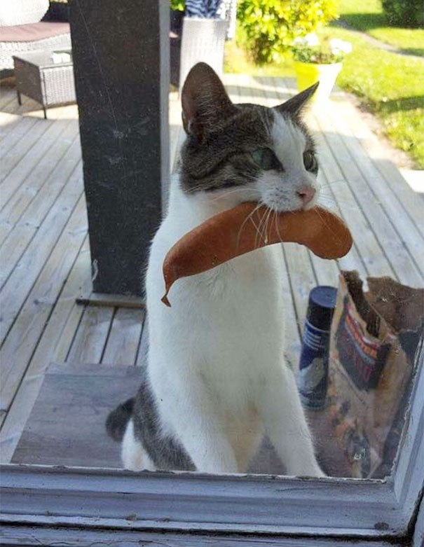 """""""Моя кошка вернулась с колбасой, украденной в каком-то местном магазине"""" вещи. милота, домашний питомец, животные, кошка, подарки, собака"""