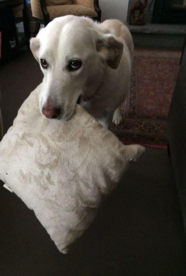 """""""Это подушка Зои. Если вы ей понравитесь, она принесёт вам свою подушку. Вы не можете её взять, но можете посмотреть"""" вещи. милота, домашний питомец, животные, кошка, подарки, собака"""