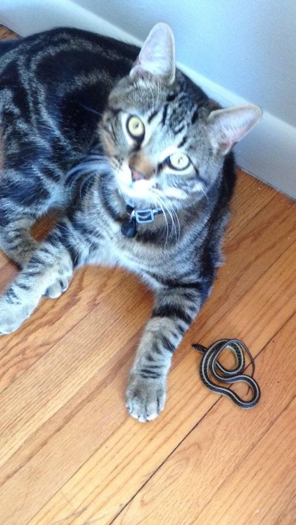 """""""Не первый раз мой кот приносит мне такие подарки"""" вещи. милота, домашний питомец, животные, кошка, подарки, собака"""