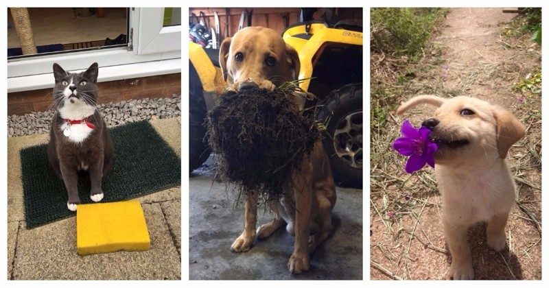25 раз, когда домашние животные приносили своим владельцам самые неожиданные подарки вещи. милота, домашний питомец, животные, кошка, подарки, собака
