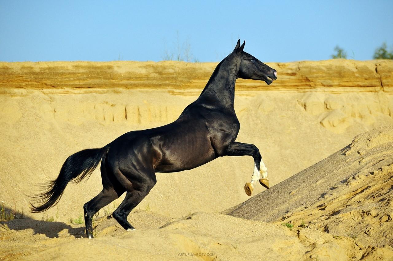 Картинки лошадей красивых лошадей