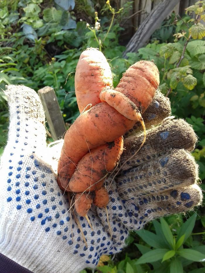 Картинки юбилею, картинки любовь-морковь