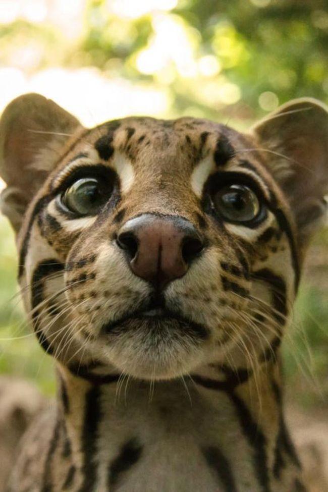 Прикольные картинки с лицом животных, днем