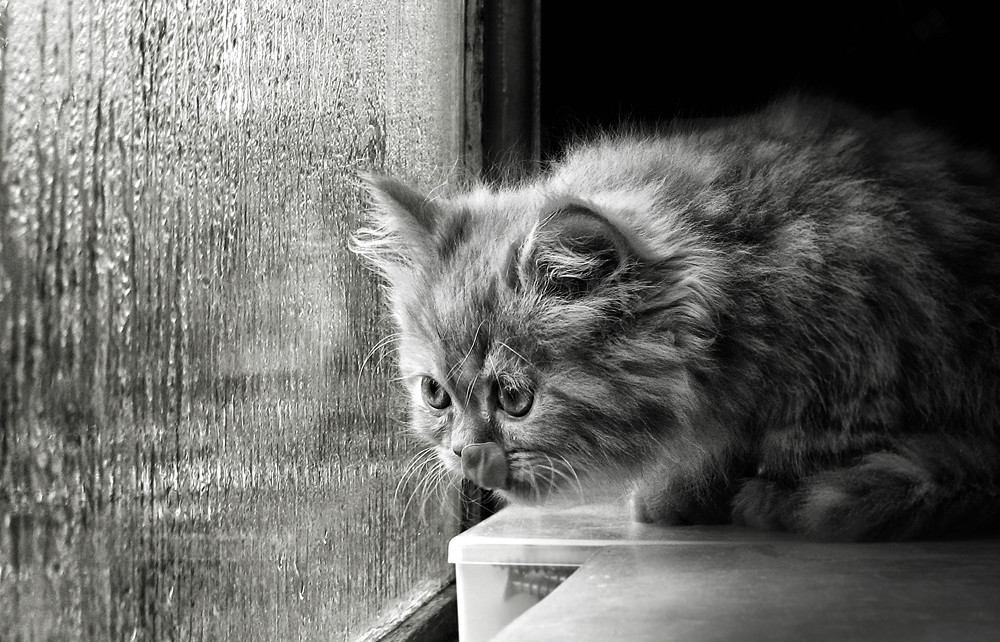 котята под дождем картинки