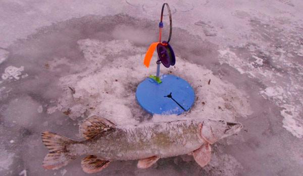 подводное видео рыбалка на жерлицы