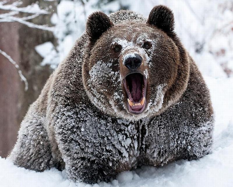 Медведь своими руками из дерева 52