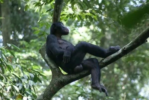 Секс c обезьяной видео 2 mb