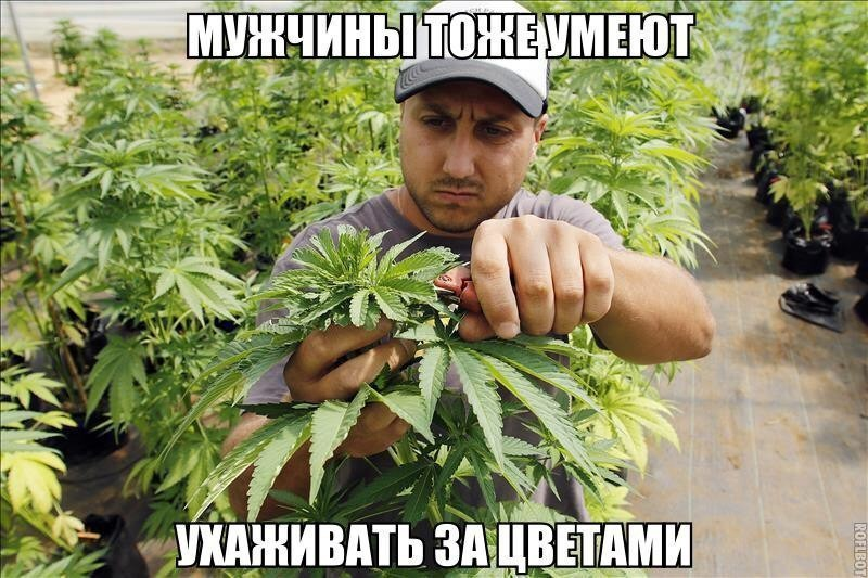 Приколы с марихуаной картинки