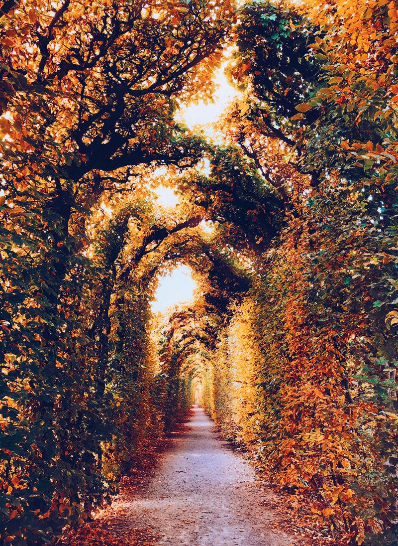 Вена краски, листва, лондон, москва, осень, природа, фото, фотограф