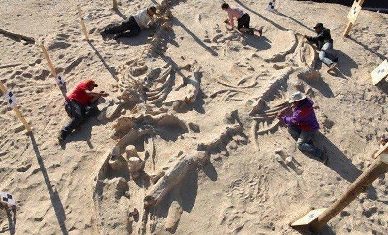 4. Кладбище китов в чилийской пустыне археолог, загадка, интересное, мир, находка, пустыня, тайна