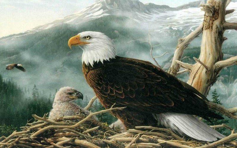 Знаете ли вы, как самка орла выбирает отца для своих орлят?