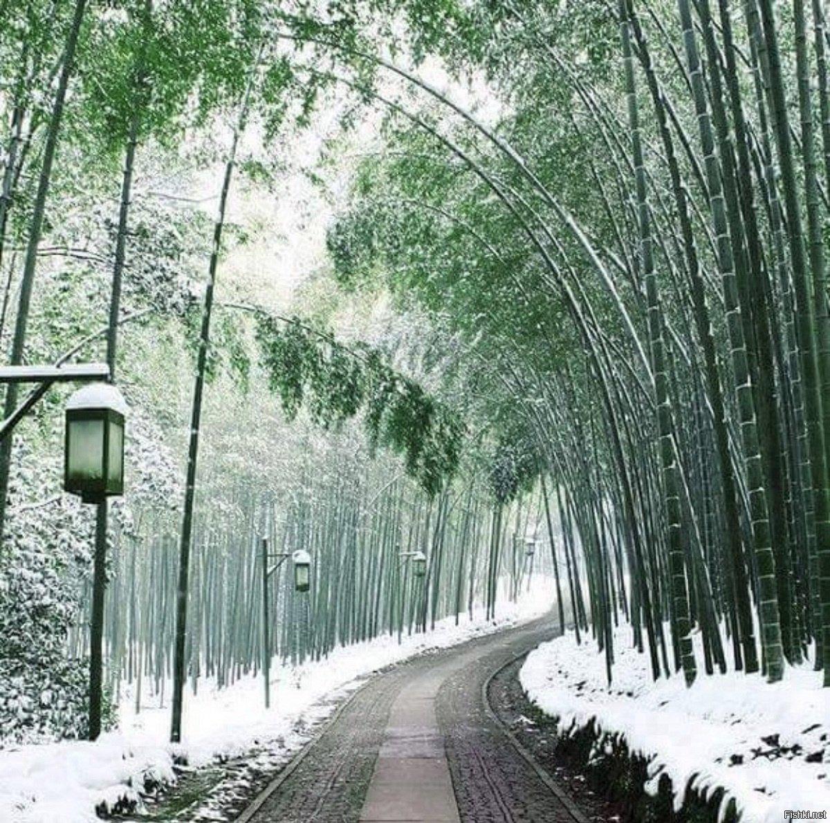 японский лес зимой фото также