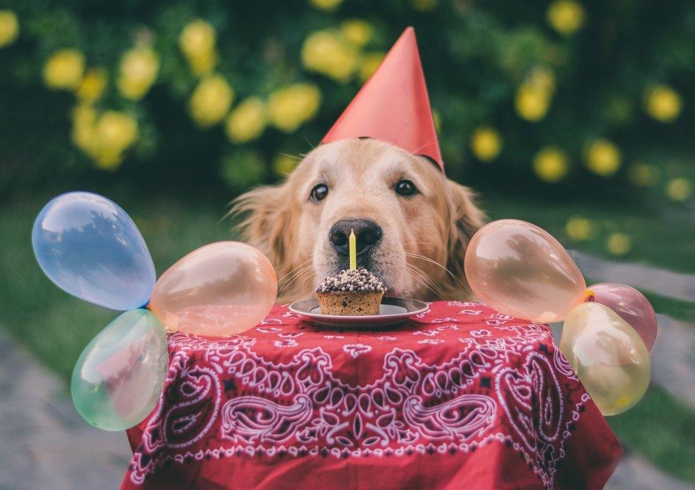 Анимацией, с днем рождения фото с животными