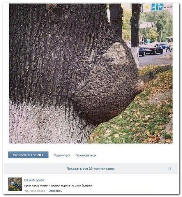 Картинки с комментариями прикольные смешные, актуальность катюха днюхой