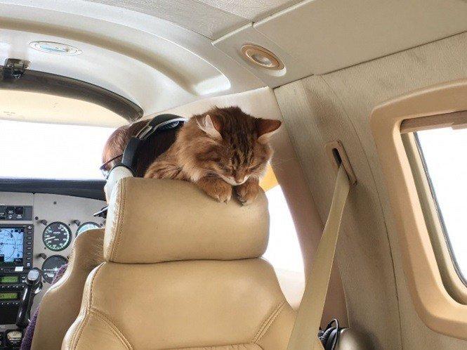 17. Дезмонд не привык расставаться со своим хозяином борт, животные, пассажир, перелет, полет, самолет, фото