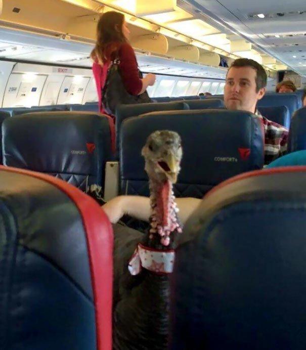 19. Еще один представитель зоо-терапии борт, животные, пассажир, перелет, полет, самолет, фото