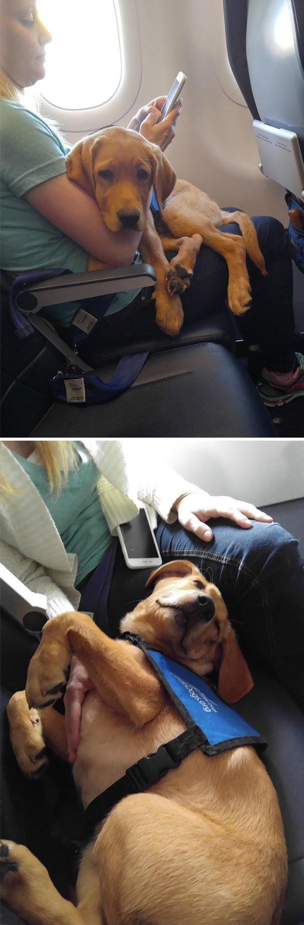 24. Отдельное место борт, животные, пассажир, перелет, полет, самолет, фото