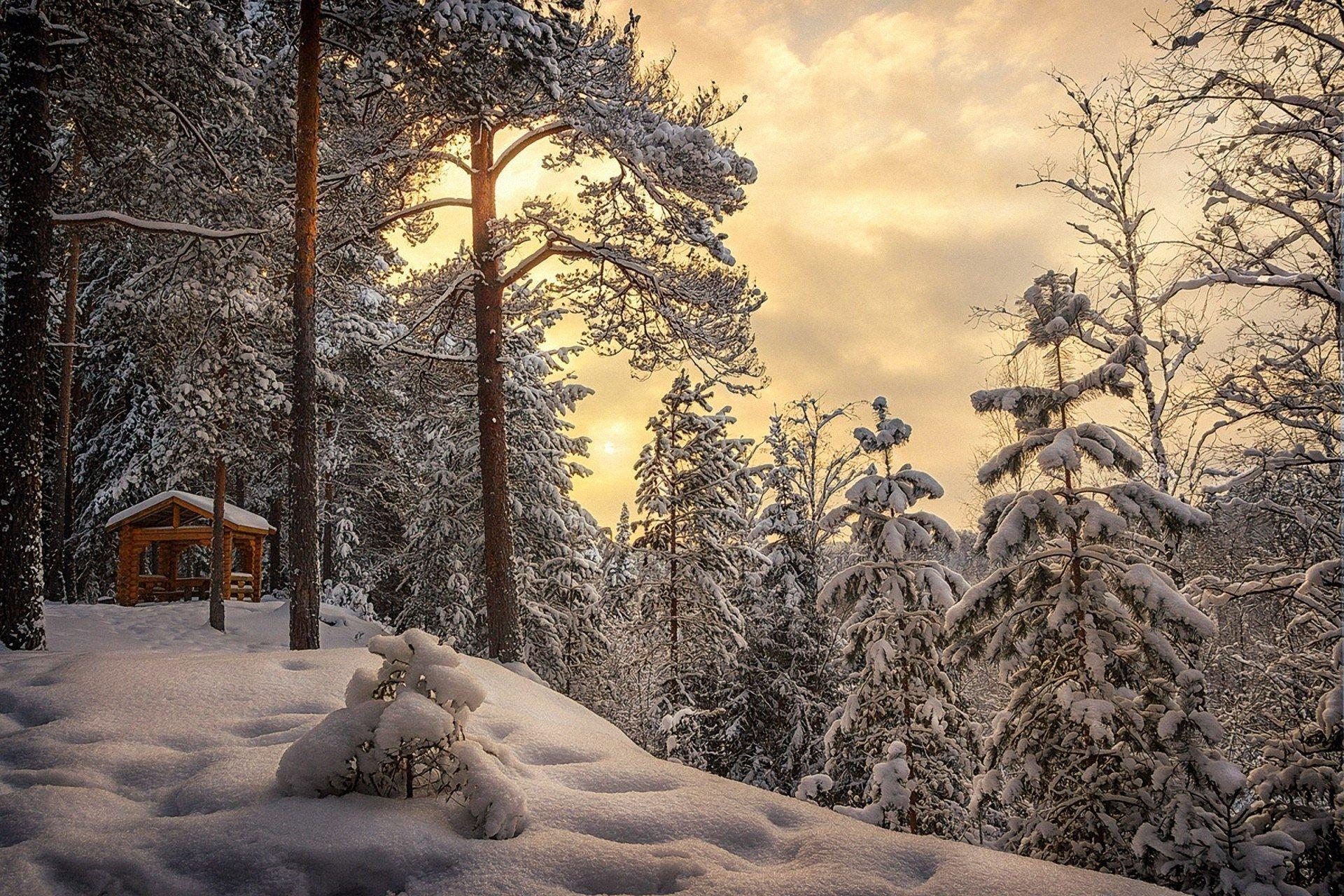 Фото зимний художественный пейзаж леса выбрать подходящий