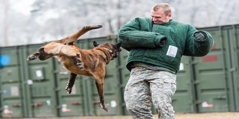 Нападение собаки на человека картинки