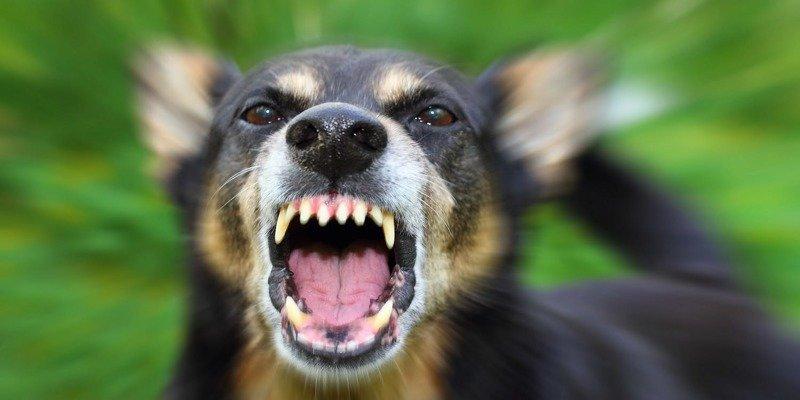 1. Если собака рычит и скалит зубы: спокойствие, только спокойствие. Нападения можно избежать. бродячие собаки, животные, нападение, напала собака, опасно, самооборона, собаки, советы