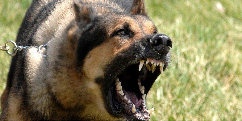 3. Если собака вас кусает: не вырывайтесь, она вцепится еще сильнее бродячие собаки, животные, нападение, напала собака, опасно, самооборона, собаки, советы
