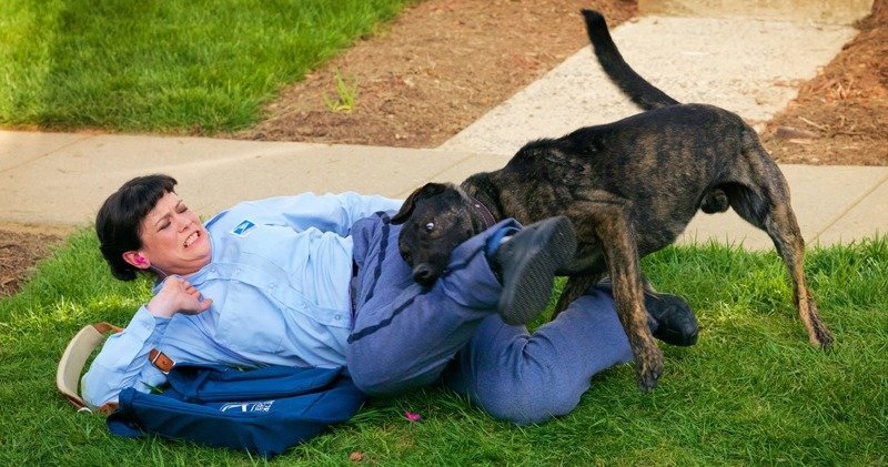 Что делать, если на вас напала собака: 5 важных советов бродячие собаки, животные, нападение, напала собака, опасно, самооборона, собаки, советы