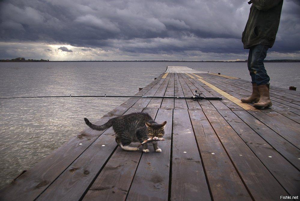 Кот рыболов прикольные картинки, картинки 960 540