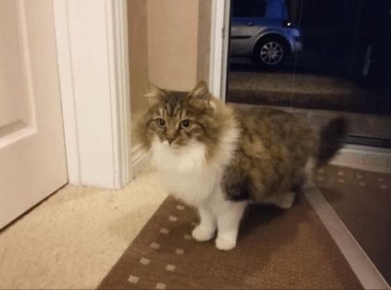 Вечерний гость попросился переночевать в доме: парень даже не думал, к каким последствиям это приведет животные, кошки, новость