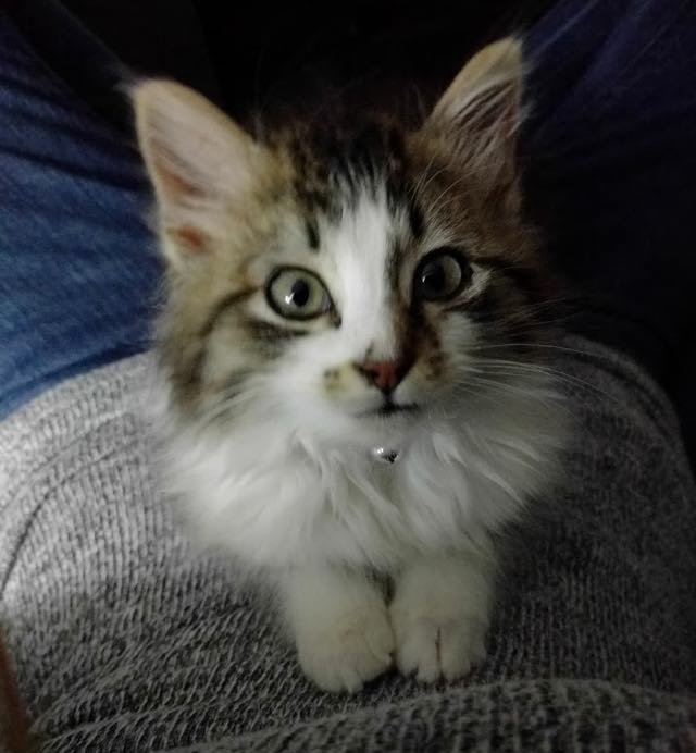 Ночью во время грозы бродячий котёнок пришел к одной паре за помощью животные, кошка, спасение