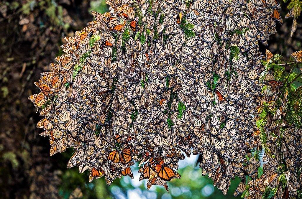 Минет полёт бабочки