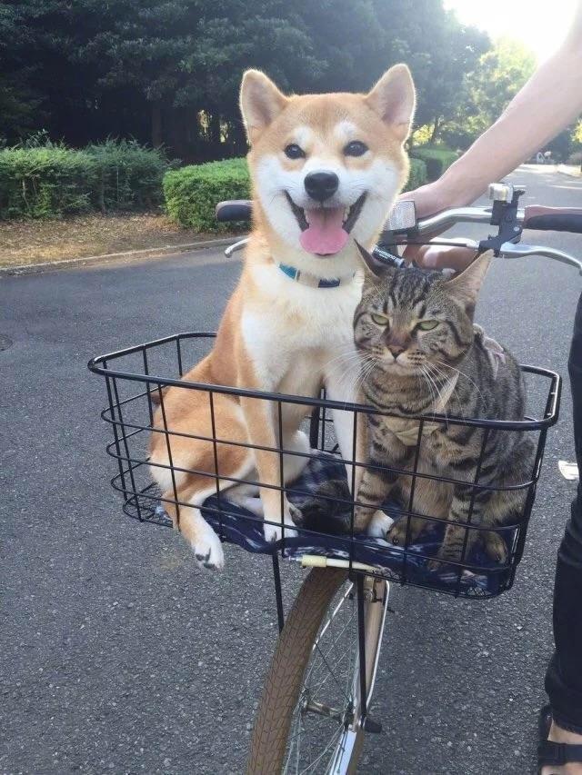 Кот совсем не рад такому соседству день, животные, кадр, люди, мир, снимок, фото, фотоподборка